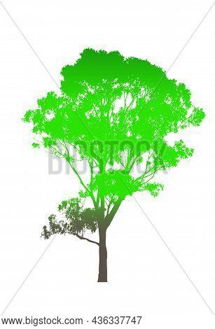 Green Australian Gum Tree With Brown Trunk