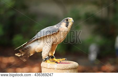 Birds Nature, Animals In, The, Wild, Birds, Flyers, Of, Forests, And, Meadows, Photos, Prey, Predato