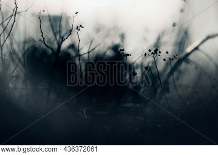 A Blurry Image Of The Dry Branches Of A Bush Shrouded In Fog In The Night Twilight, Evoking Fear. Ha