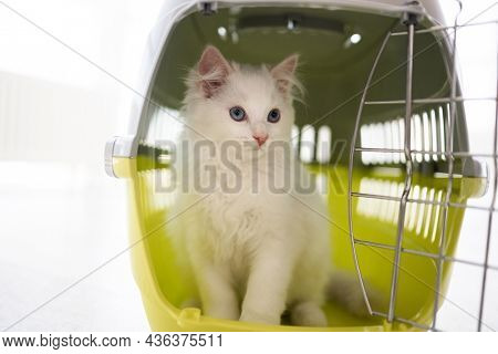 Adorable ragdoll cat with beautiful blue eyes sitting inside of carrying basket for transportation and looking back. Lovely purebred feline pet on white background