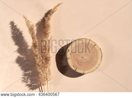 Woodcut Lying On Trendy Beige Background With Pampas Grass. A Wooden Platform With Dry Flowers For N
