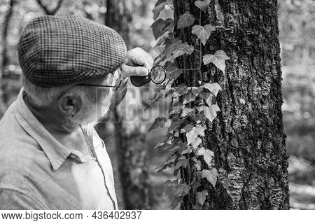 Curiosity To Botany. Picky Detective In Forest. Explore Nature. Pensioner With Magnifier Exploring F