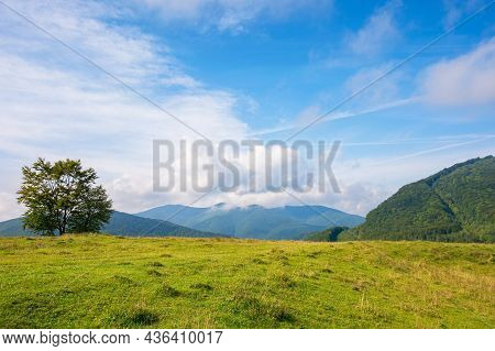 Trees On The Grassy Hill. Beautiful Early Autumn Landscape In Mountains. Sunny Morning With Fluffy C