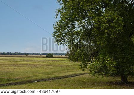 Dutch Summer Landscape With Tree, Green Grass And Cloudy Blue Sky