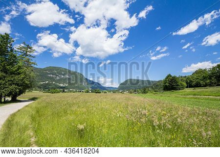 Summer Flowers Blossoming In A Mountain Glade In Triglav National Park, In Stara Fuzina, By Lake Boh