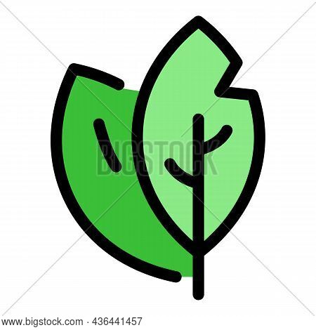 Bay Leaf Icon. Outline Bay Leaf Vector Icon Color Flat Isolated