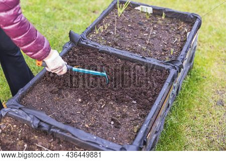 Close Up View Of Man Loosen Soil With A Rake In Garden Bed In Pallet Collar. Sweden.
