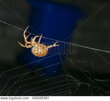 The Giant House Spider Is One Of Our Fastest Invertebrates, Running Up To Half A Metre Per Second. T