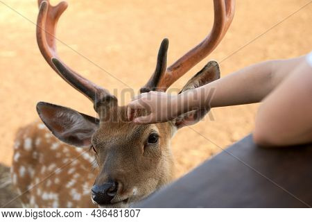 A Child Strokes A Deer That Has Come Up To The Fence. A Fragment Of A Deer's Hand And Muzzle Are Dep