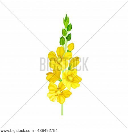 Bright Yellow Floret With Showy Petals And Stamen On Stem Closeup Vector Illustration