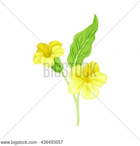 Bright Yellow Flower With Showy Petals On Green Stem Closeup Vector Illustration