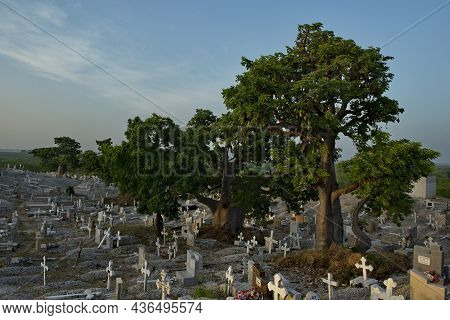 Joal. Senegal. October 15, 2021. Catholic Cemetery Surrounded By Majestic Baobabs Near The Fishing V