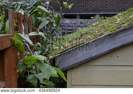 Green Roof In Urban Environment. London, Uk. Turf On The Top Of The Garden Shed. A Green Roof Resemb