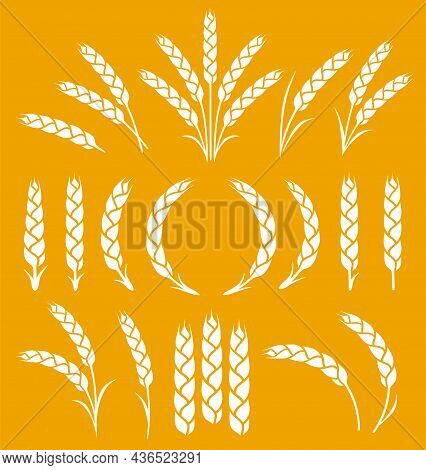 Silhouette Of Weat Ears, Barley And Rye Spikelets Set Icons
