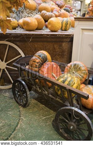 Decorative Pumpkins, Halloween Decor In Moscow City. Harvest, Garden Decoration In Gum, Moscow City.