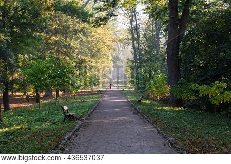 Straight Footpath In Park With Benches On Both Sides Among The Old Trees And Shrubs At Autumn Sunny