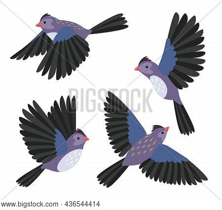 Cartoon Flying Bird. Birds Flyng Poses For Movement And Animation, Vector Motion Birdie Character Is
