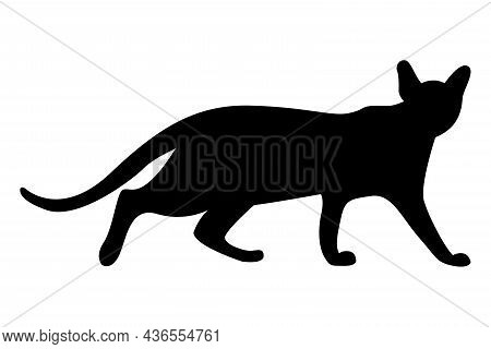 Vector Silhouette Of A Cat. Pet. Silhouettes Of Cats. Beautiful Feline Silhouette Of A Prowling Cat.