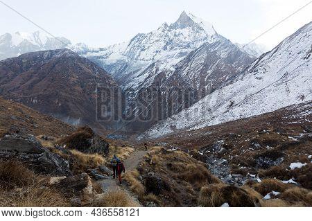 Annapurna Region, Nepal - November 10, 2018: Hikers Walk The Track Abc To Machhapuchhre Base Camp, A