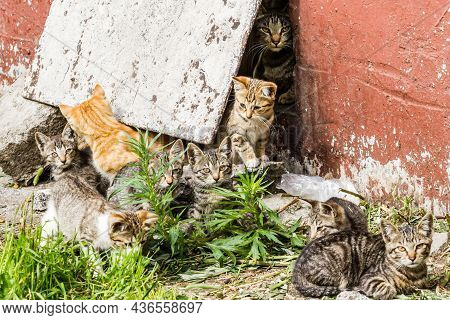 Group Of Homeless Tabby Kittens In A City Street Near The Old House