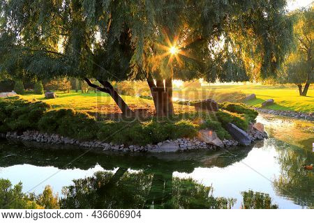 Autumn Forest Trees. Nature Green Wood Sunny Background At Sunrise, Sunset. Sunlight In The Green Fo