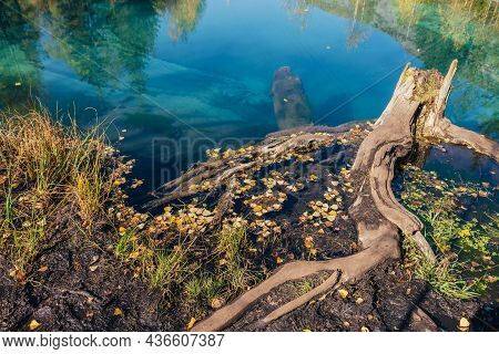 Colorful Autumn Landscape With Tree Stump In Clear Water Of Turquoise Lake With Reflection Of Yellow
