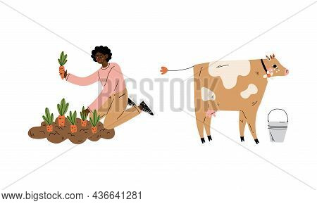 Woman Farmer Cultivating Carrot Crop On Garden Bed And Grazing Cow Vector Set