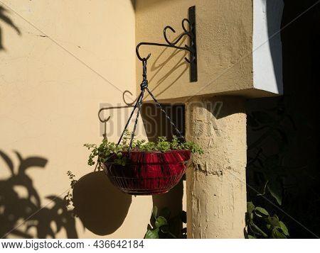 Beautiful Clay Hanging Pot Hang Outdoor In Full Sun