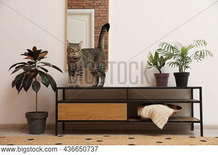 Cute Tabby Cat On Shelving Unit Indoors
