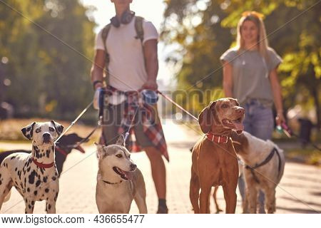 A bunch of dogs on the leash on a beautiful sunny day in the park with dog walkers. Pets, walkers, service