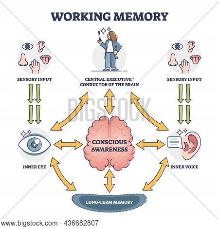 Working Memory And Conscious Awareness, Outline Diagram Vector Illustration. Sensory Input Stage Fol