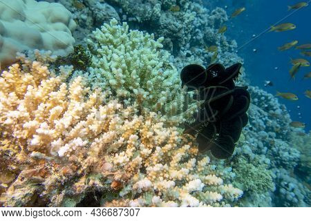 Colorful, Picturesque Coral Reef At The Bottom Of Tropical Sea, Great Hard Corals And Black Crinoid,