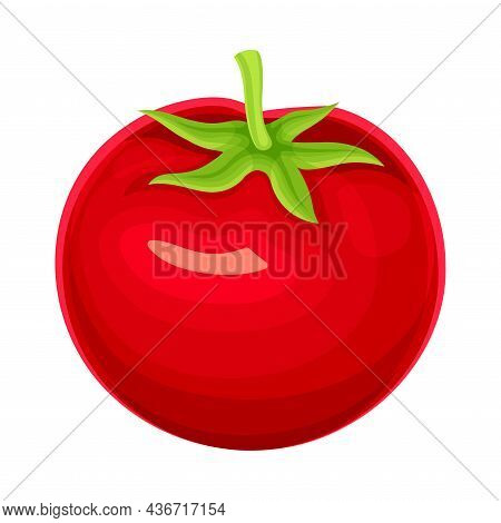 Ripe Red Tomato Vegetable As Healthy Raw Food And Garden Cultivar Closeup Vector Illustration
