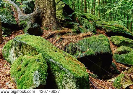 Forest Landscape With Stones Covered Green Moss. Beautiful Nature Background. Moss Detail Close Up,