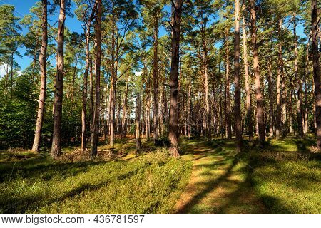 Im Darßwald Auf Dem Darß