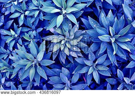 Blue-green Background With Tropical Leaves And Raindrops. Blue Volumetric Plants In The Rainforest.