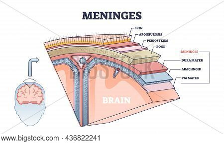 Meninges As Central Brain Part Structure Or Under Skin Layers Outline Diagram. Labeled Educational A