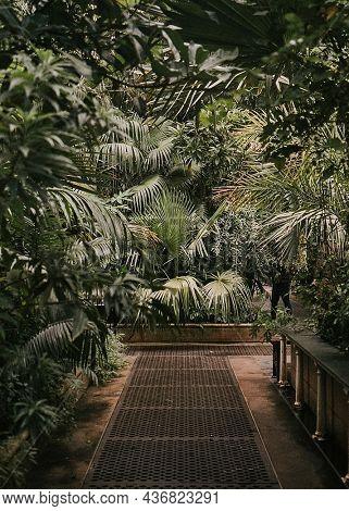 Botanical garden moody greenhouse nature photo