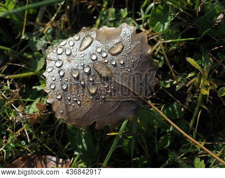 Sunny Autumn Morning. Wooden Leaf With Dew Drops. Water Drops On A Wooden Leaf. Weather Forecast