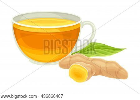 Turmeric Or Curcuma Longa Rhizome With Cup Of Prepared Beverage Closeup Vector Illustration