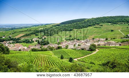 Old Village With Vineyards