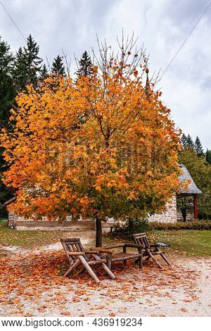 Gorgeous autumn maple tree with yellow and orange leaves on the lake Lago di Braies. Northern Italy. Dolomites. There is a walking path around the lake. Travel to Europe