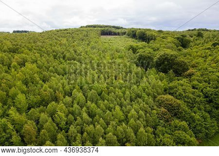 Aerial View Of Green Pine Forest With Canopies Of Spruce Trees In Summer Mountains.