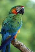 Beautiful Parrot perching on a branch against blurred background. poster