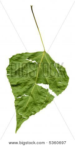 Grunge Leaf, Isolated, With Clipping Path