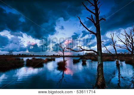Stormy Sunset Over Bog With Dead Trees