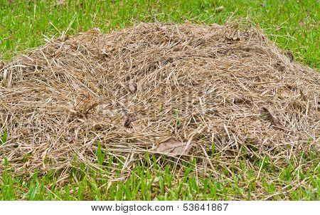 Pile Of Hay