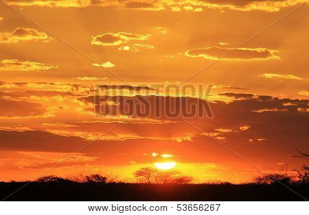 African Sunset Background - Golden Mystic Beauty