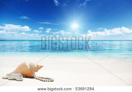sea shells and perls on the beach