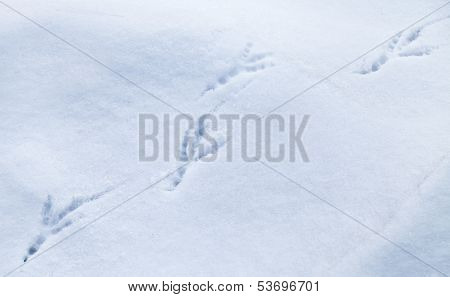 Detailed bird traces in fresh snow. Photo texture poster